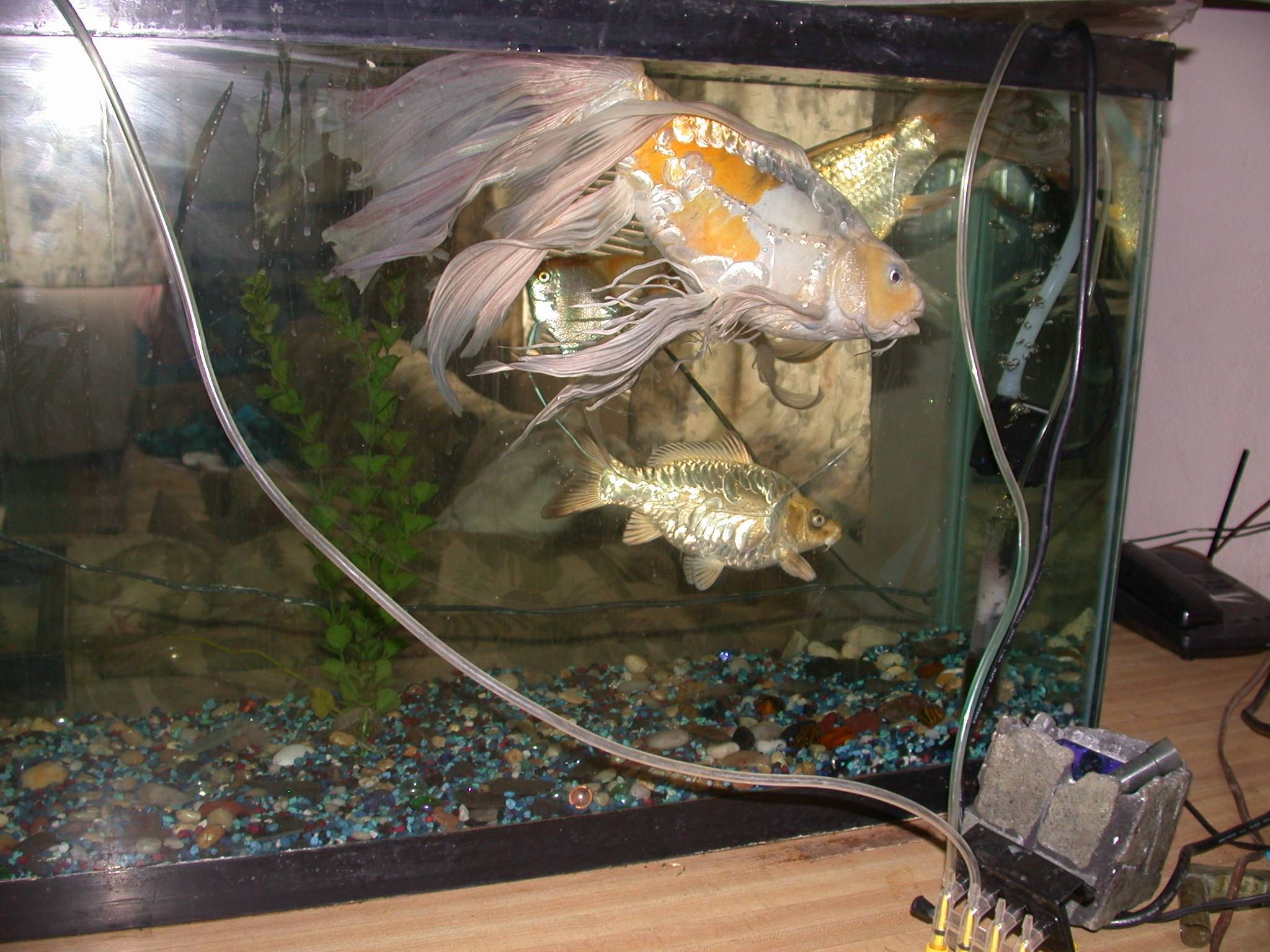 Fish breeding fish care and how to revive dead gold fish for Koi breeding pond